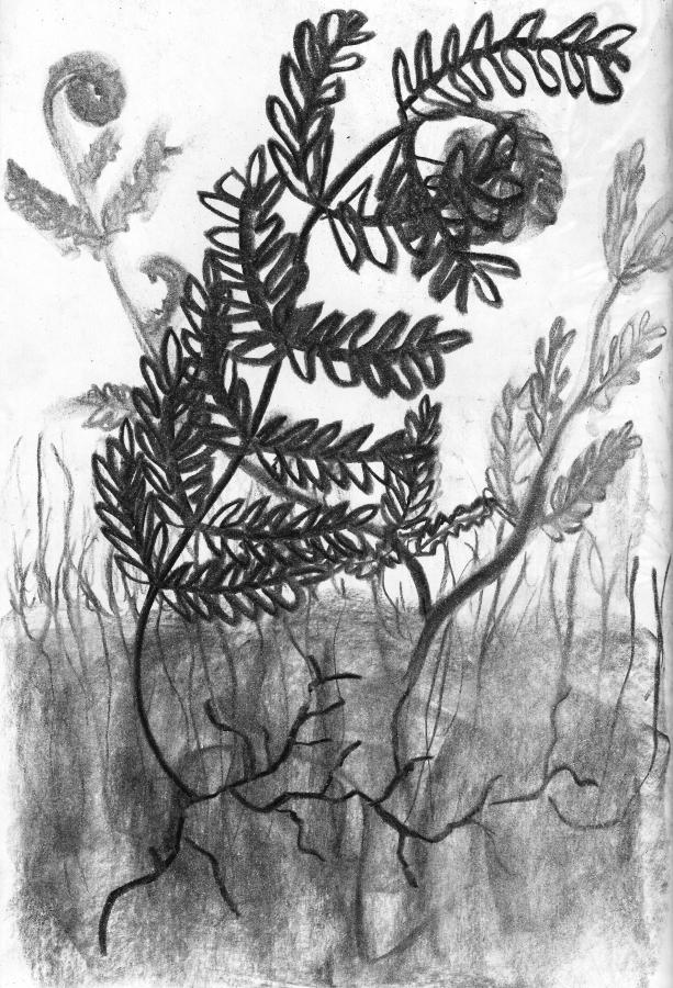 tekening door Dominique De Groen